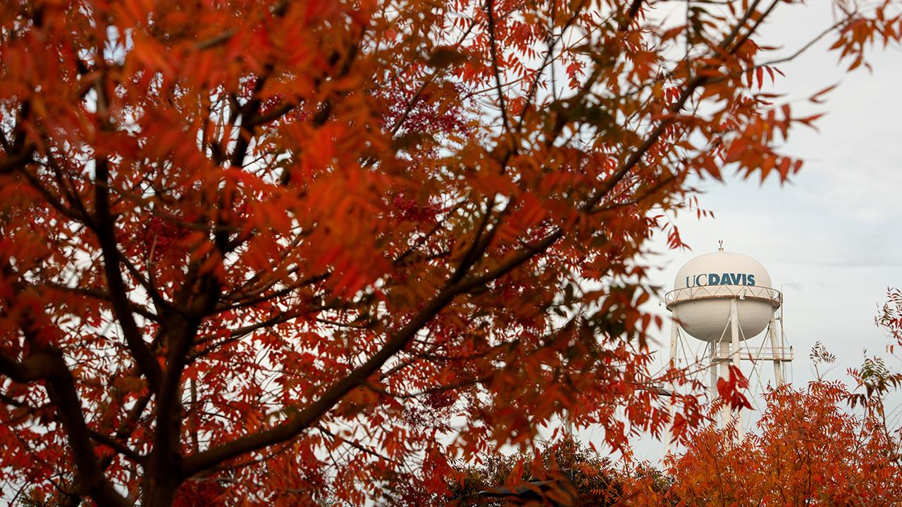 autumn leaves frame the UC Davis water tower with cloudy skies